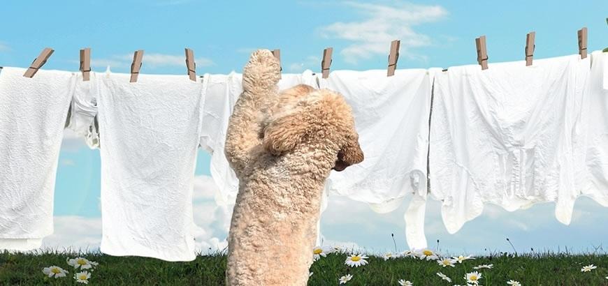 """Storax steunt """"Stichting De hond kan de was doen"""""""